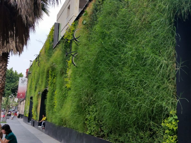A grass wall as an example of colorful urban artwork in Mexico City.