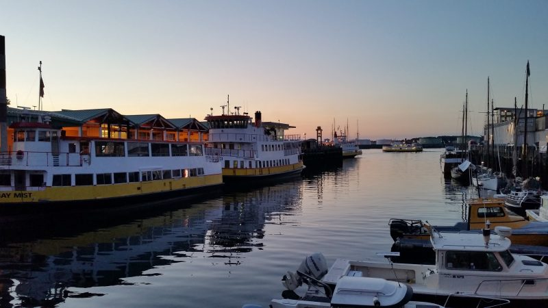 Two yellow and white ferry boats on the water at sunrise in Portland, Maine.
