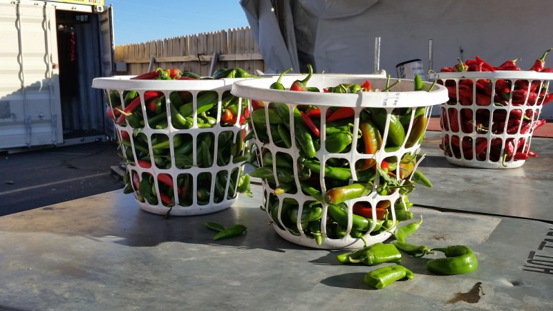 Three White bushels filled with red and green New Mexico chile peppers.
