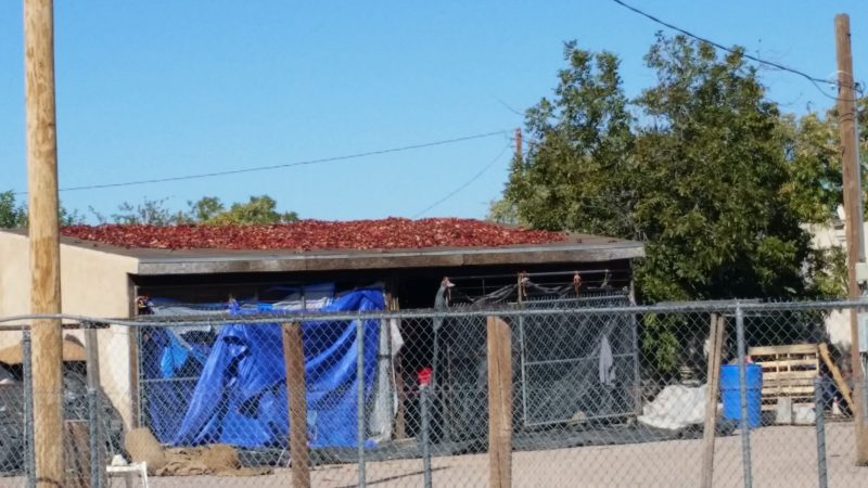Red Chile Drying in the Sun. Hatch, New Mexico