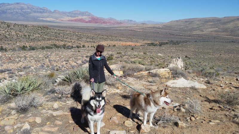A woman with a husky and a malamute on leashes hiking in the desert.