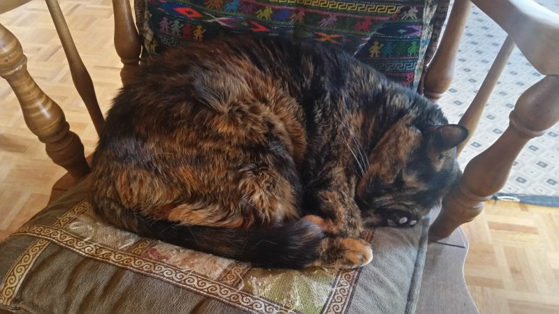 Tortoise shell cat sleeping on a pillow a wooden chair