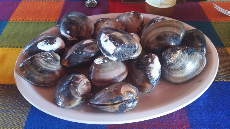 A plate of clams on a colorful table cloth in Mexico.