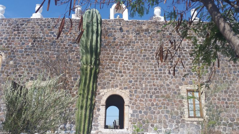 Cactus with a Baja California mission in Mulege, Mexico in the background.