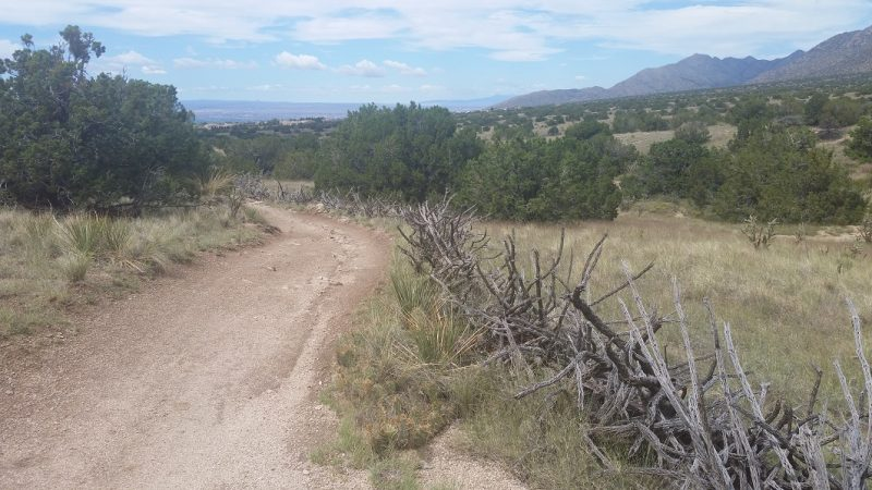 A hiking trail lined with piled-up sticks in the foothills of Albuquerque.