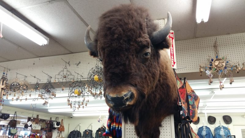 Stuffed buffalo head on a wall in a gift shop.