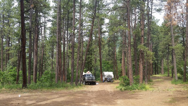 A truck and camper among pine trees at Links Tract Campground, one of the free Pecos, NM camping areas in the Santa Fe National Forest.