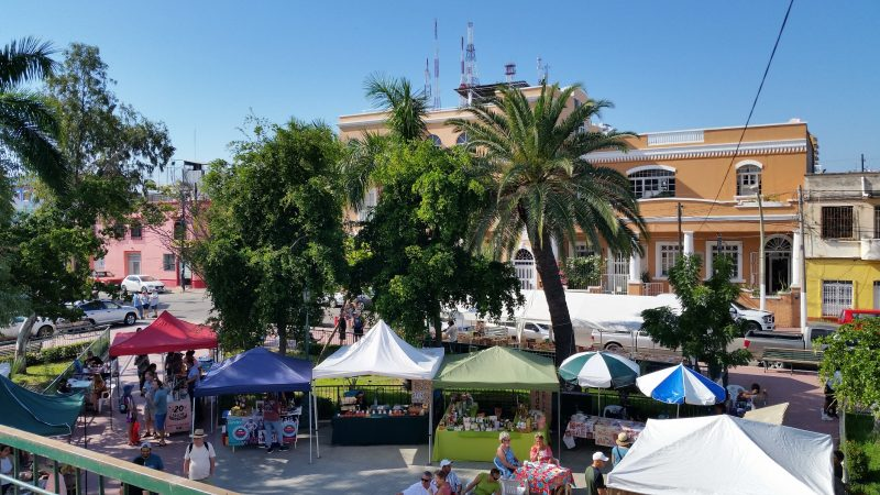 Several market stalls at the Saturday Mazatlan Organic Market set up beneath palm trees with buildings and red and white radio towers in the background.