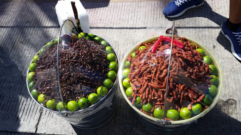 Two buckets full of dried candied minnows and grasshoppers; two examples of unique Mexican street food.