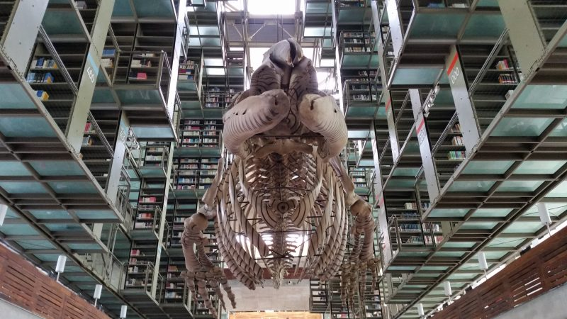 Whale skeleton hanging from the ceiling of Vasconcelos library in Mexico city.