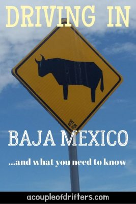 A yellow road sign in Baja Mexico with an image of a cow.