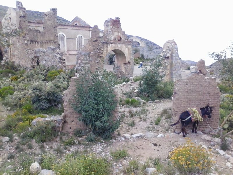 A donkey in front of the ghost town above Real de Catorce in San Luis Potosi state in Mexico.
