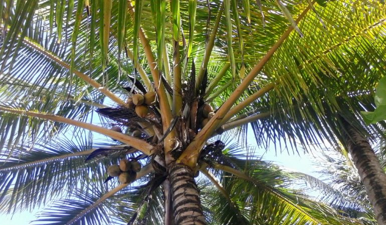 Paradise Found…On Big Corn Island