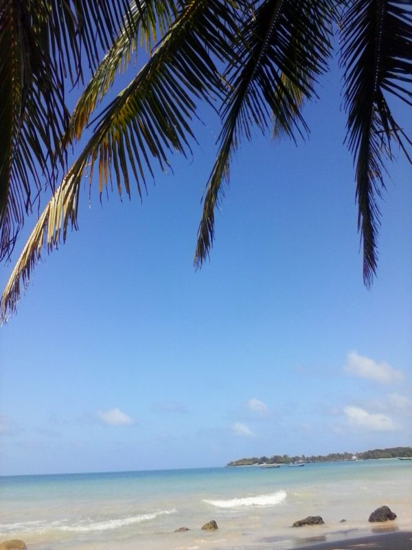 Palm trees with the blue water in the background on Big Corn island off the coast of Nicaragua.