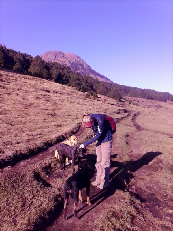 A woman in a blue jacket hiking Volcan Tajumulco with 3 dogs.