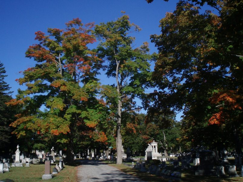 Autumn trees at Evergreen Cemetery.